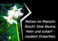 Mitten im Matsch - ätsch, eine Blume. Zaubert Erwachen.