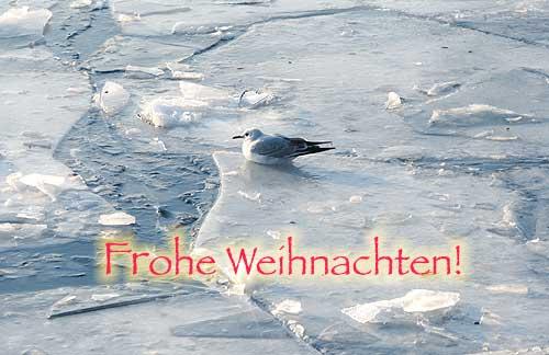 Winter, Eis