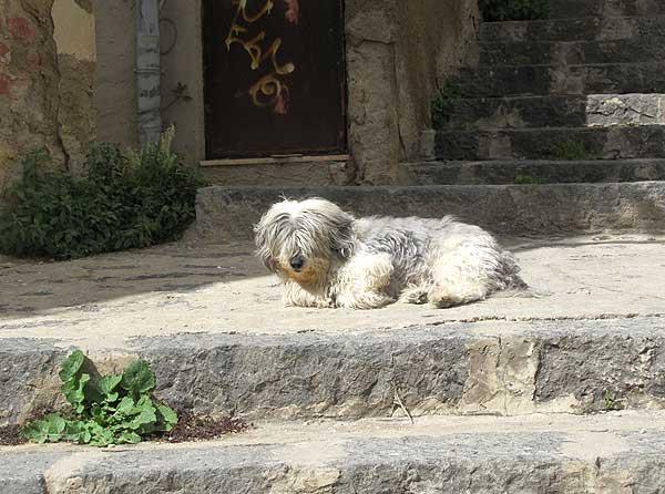 Hund in Agrigent