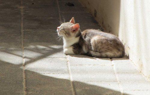 Katze in Sizilien