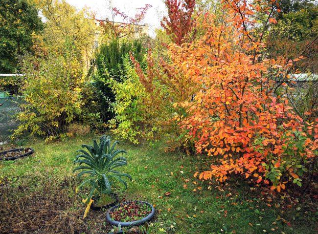 Oktober im Garten